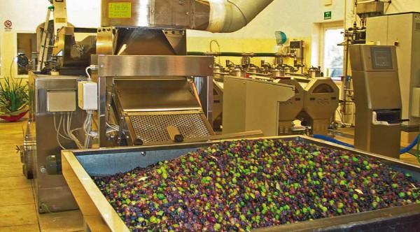 olio-di-oliva-produzione-2
